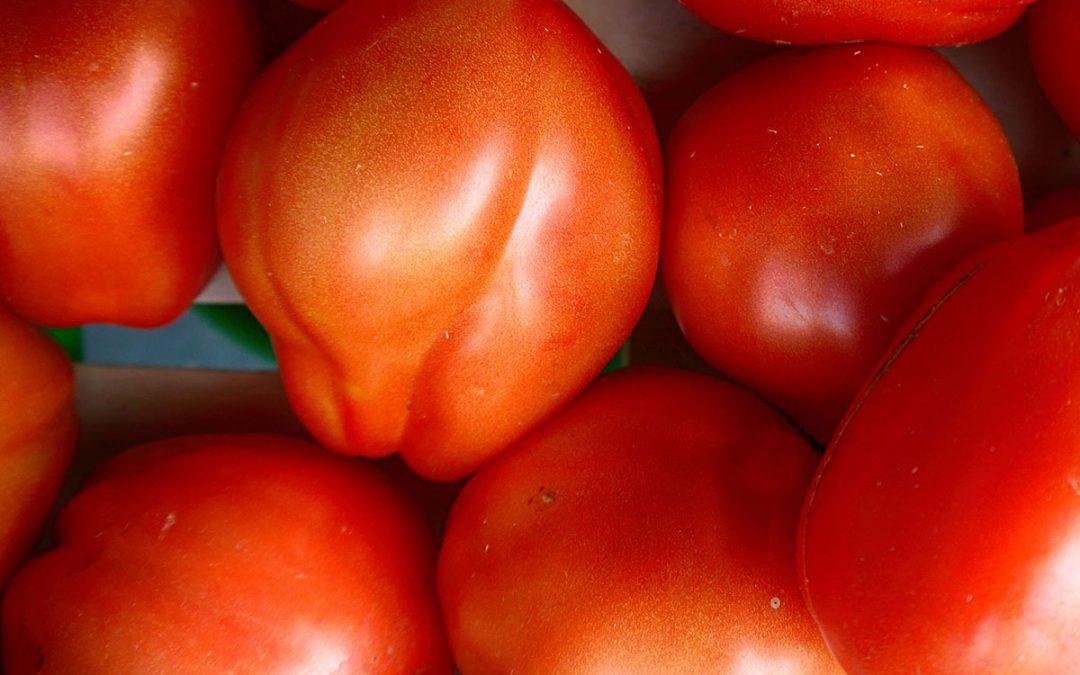 Pomodori fatti in casa