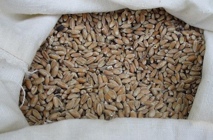 Pane con Farina di Solina